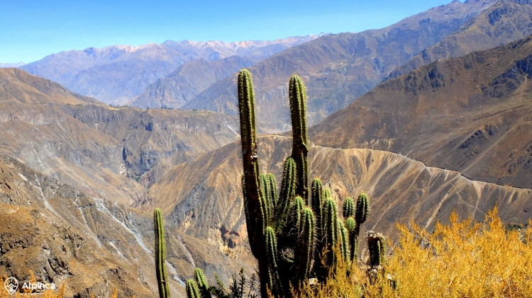 kanion-colca-trekking-peru