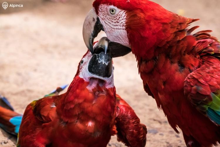 Kolorowe papugi w Parque das Aves